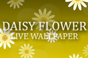 Daisy Flower Live Wallpaper