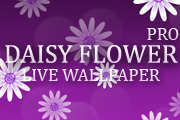 Daisy Flower Pro Live Wallpaper